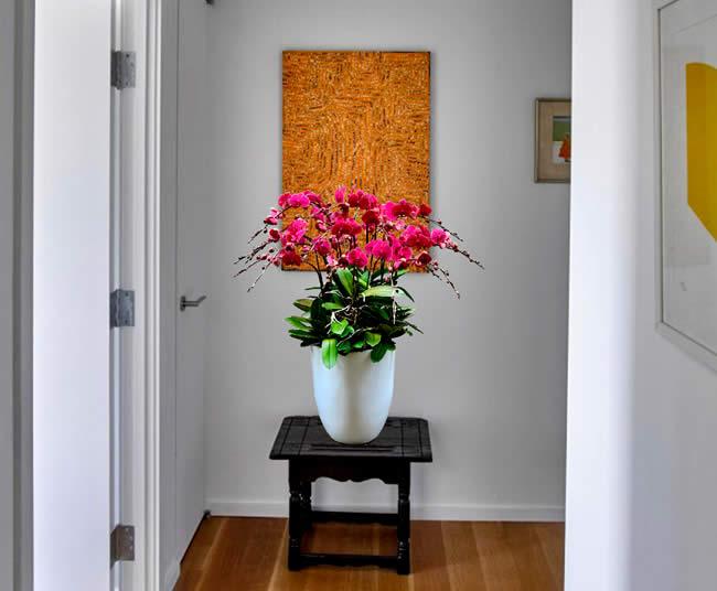 Chăm sóc lan hồ điệp đúng cách để có chậu hoa đẹp nhất