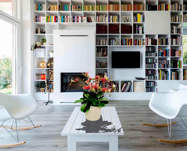 Hoa lan tiểu hồ điệp rất phù hợp để trưng bày ở phòng khách, bàn làm việc, văn phòng nhỏ, ...